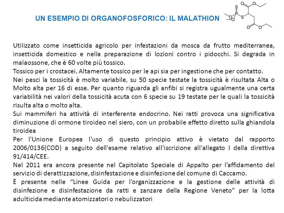 UN ESEMPIO DI ORGANOFOSFORICO: IL MALATHION Utilizzato come insetticida agricolo per infestazioni da mosca da frutto mediterranea, insetticida domesti