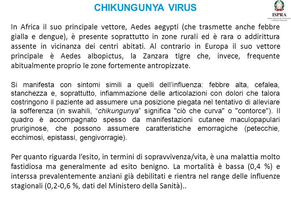 CHIKUNGUNYA VIRUS In Africa il suo principale vettore, Aedes aegypti (che trasmette anche febbre gialla e dengue), è presente soprattutto in zone rura