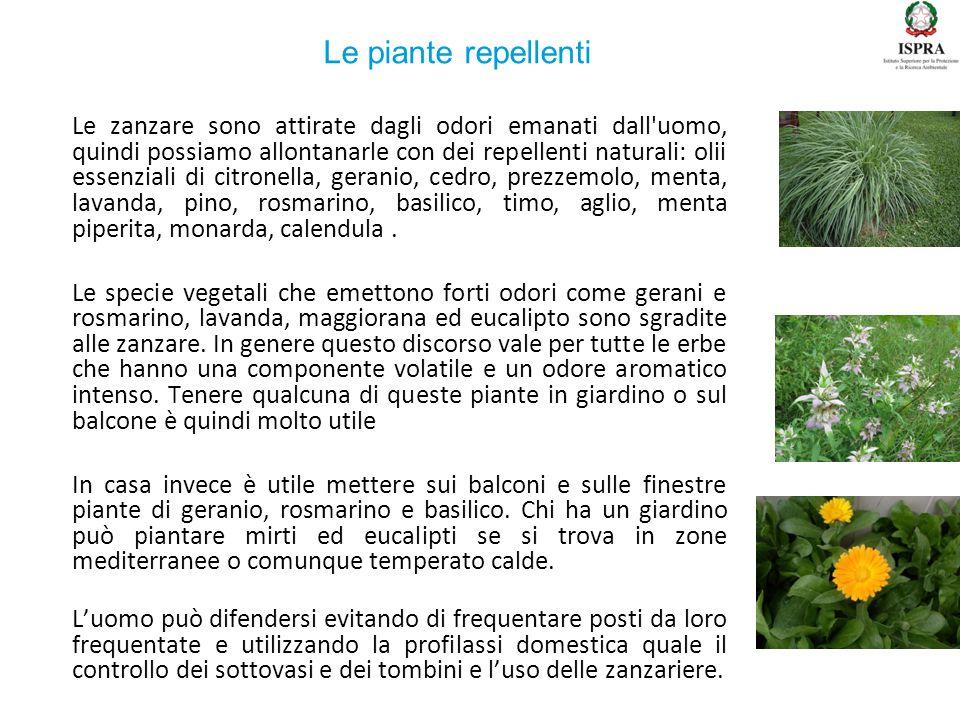 Le zanzare sono attirate dagli odori emanati dall'uomo, quindi possiamo allontanarle con dei repellenti naturali: olii essenziali di citronella, geran