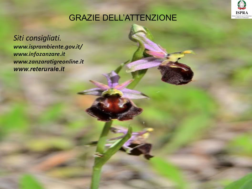 GRAZIE DELL'ATTENZIONE Siti consigliati. www.isprambiente.gov.it/ www.infozanzare.it www.zanzaratigreonline.it www.reterurale.it