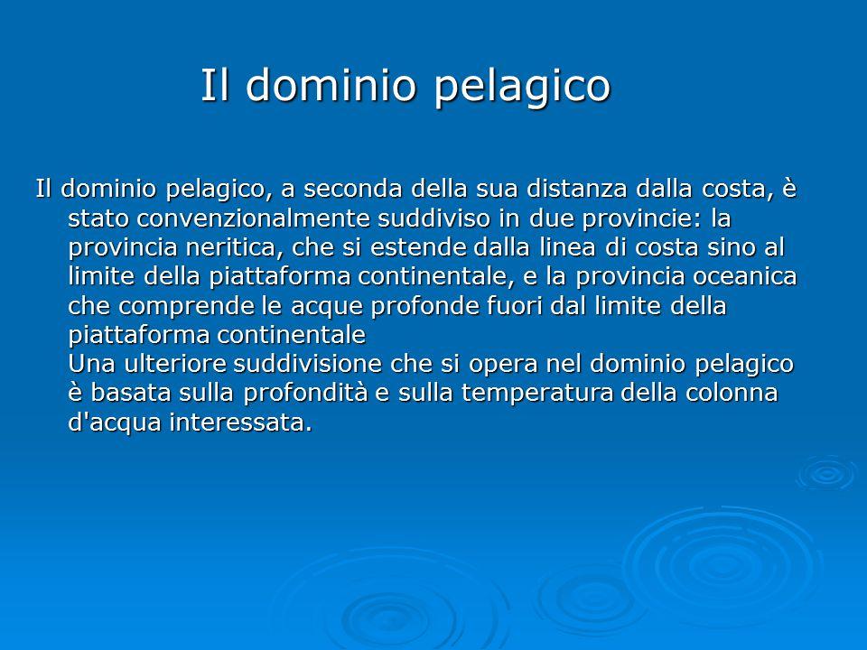 Il dominio pelagico Il dominio pelagico, a seconda della sua distanza dalla costa, è stato convenzionalmente suddiviso in due provincie: la provincia