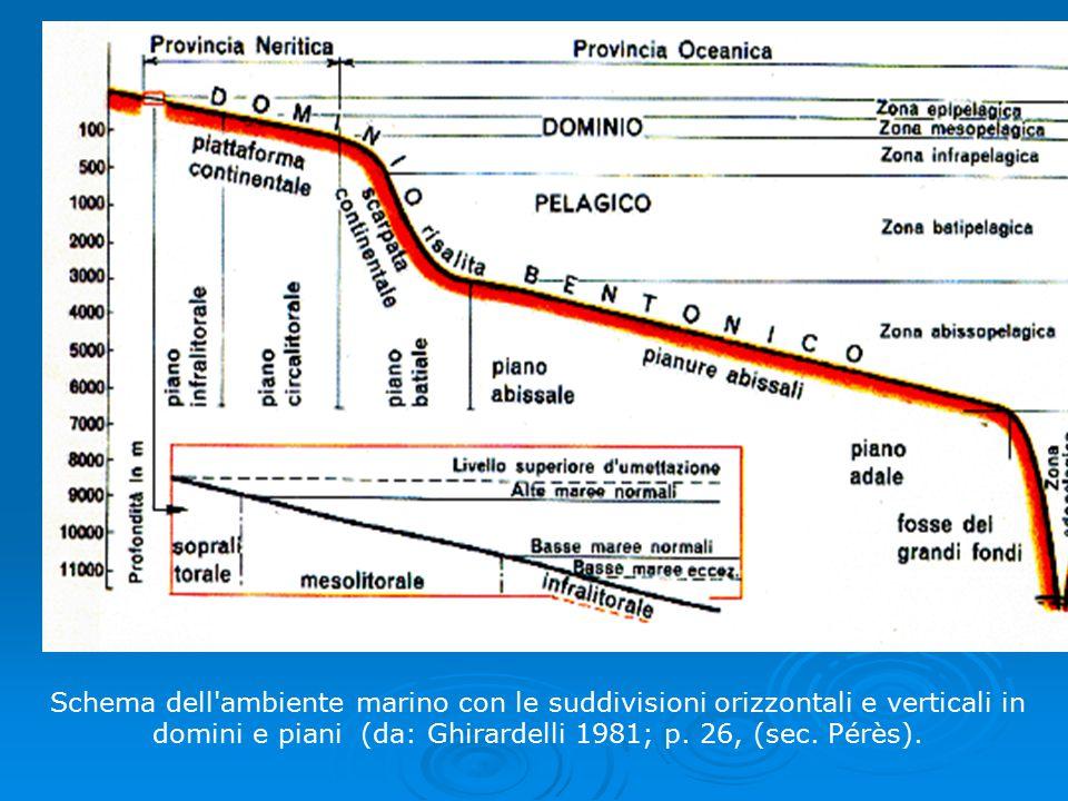 Schema dell'ambiente marino con le suddivisioni orizzontali e verticali in domini e piani (da: Ghirardelli 1981; p. 26, (sec. Pérès).