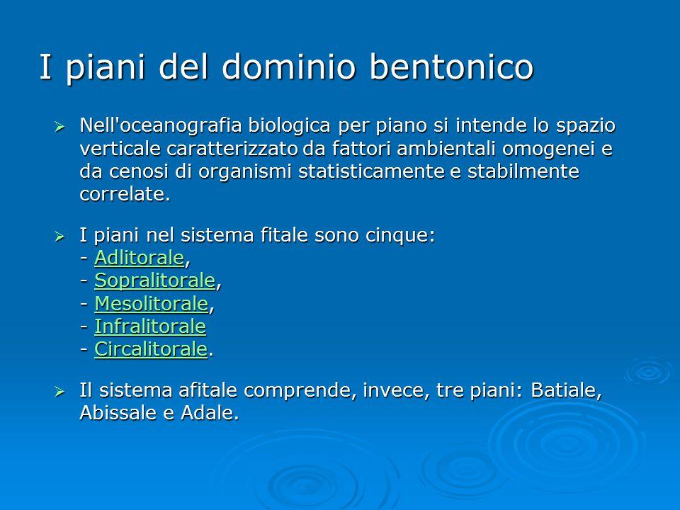 I piani del dominio bentonico  Nell'oceanografia biologica per piano si intende lo spazio verticale caratterizzato da fattori ambientali omogenei e d