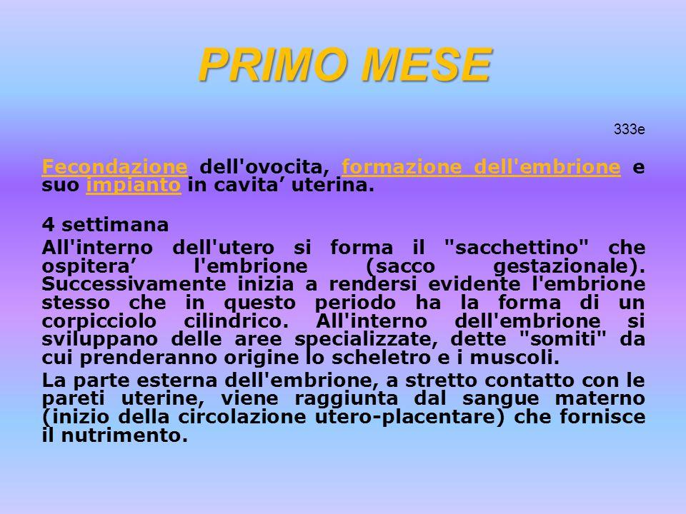PRIMO MESE 333e FecondazioneFecondazione dell'ovocita, formazione dell'embrione e suo impianto in cavita' uterina.formazione dell'embrioneimpianto 4 s