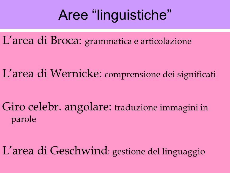 """Aree """"linguistiche"""" L'area di Broca: grammatica e articolazione L'area di Wernicke: comprensione dei significati Giro celebr. angolare: traduzione imm"""