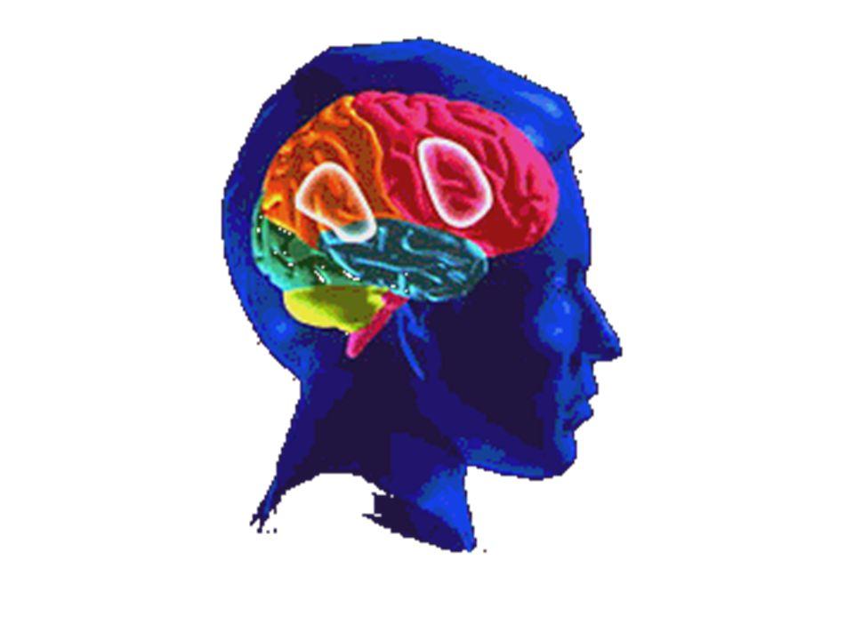 I due emisferi sono asimmetrici da un punto di vista strutturale Esistono asimmetrie anatomiche e strutturali anche nel cervello di altri animali Sul piano delle funzioni superiori la diversità non genera dominanza; sulle attività elementari di senso e moto sono considerarti equivalenti La dominanza manuale non indica necessariamente quella emisferica= pazienti afasici: 61% dei mancini – funzioni linguistiche nell'emisfero sinistro.