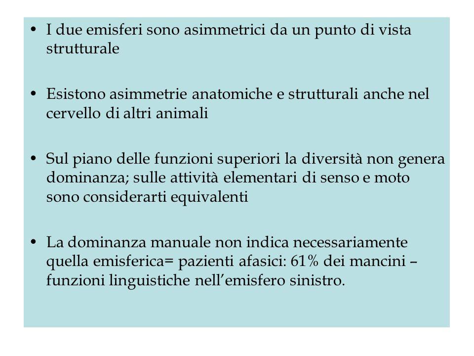 I due emisferi sono asimmetrici da un punto di vista strutturale Esistono asimmetrie anatomiche e strutturali anche nel cervello di altri animali Sul