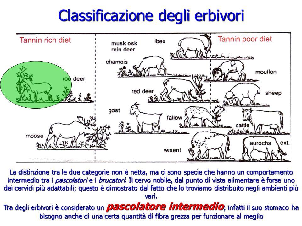 Classificazione degli erbivori La distinzione tra le due categorie non è netta, ma ci sono specie che hanno un comportamento intermedio tra i pascolat