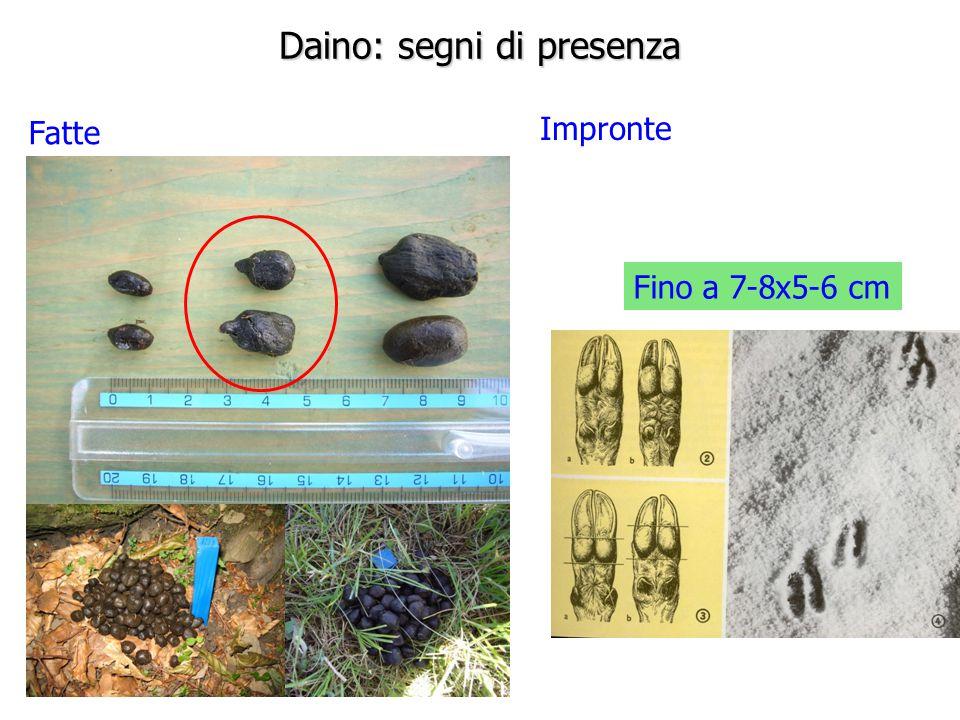 Daino: segni di presenza Fatte Impronte Fino a 7-8x5-6 cm