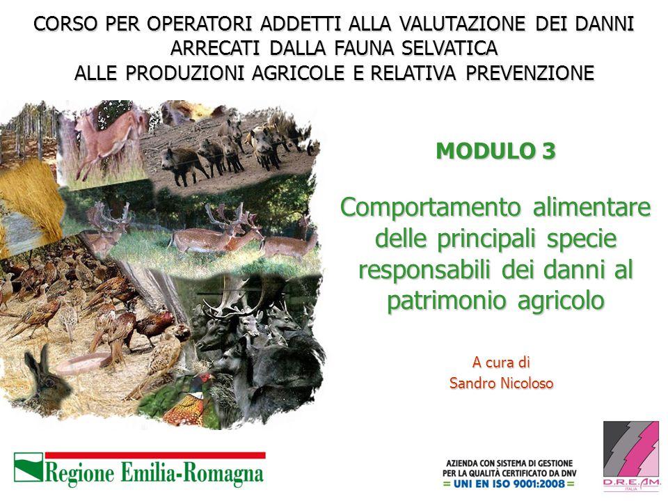 MODULO 3 Comportamento alimentare delle principali specie responsabili dei danni al patrimonio agricolo A cura di Sandro Nicoloso CORSO PER OPERATORI
