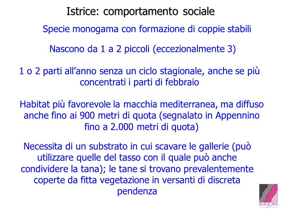 Istrice: comportamento sociale Specie monogama con formazione di coppie stabili Nascono da 1 a 2 piccoli (eccezionalmente 3) 1 o 2 parti all'anno senz
