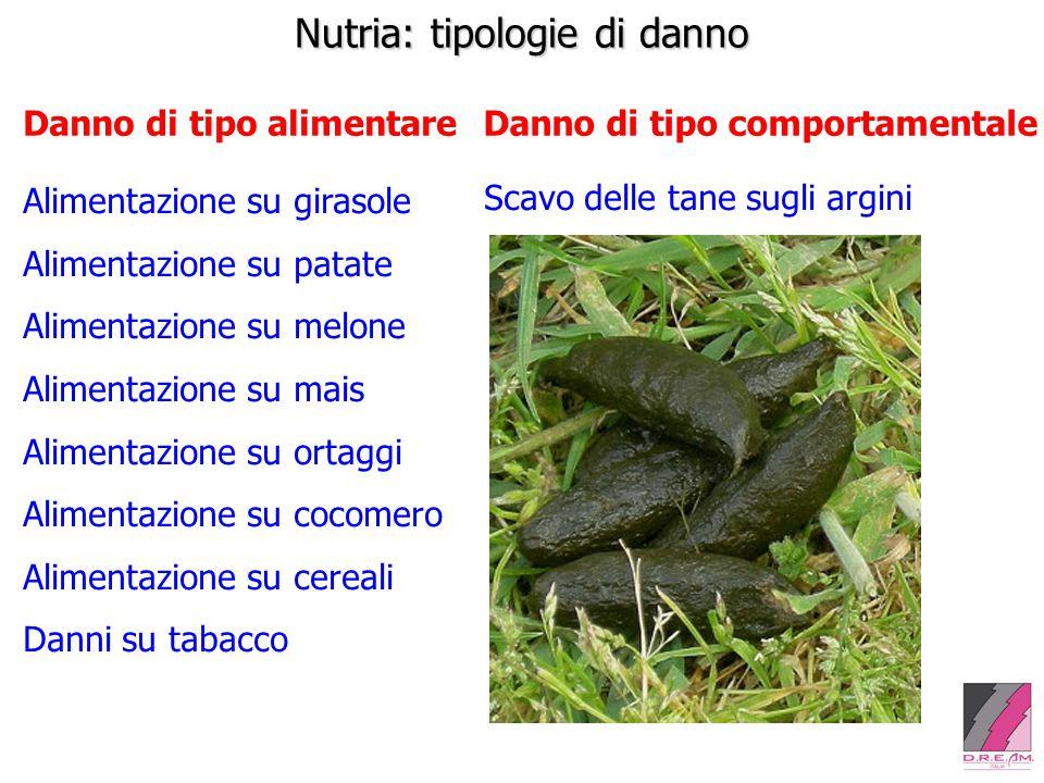 Nutria: tipologie di danno Danno di tipo alimentareDanno di tipo comportamentale Scavo delle tane sugli argini Alimentazione su girasole Alimentazione