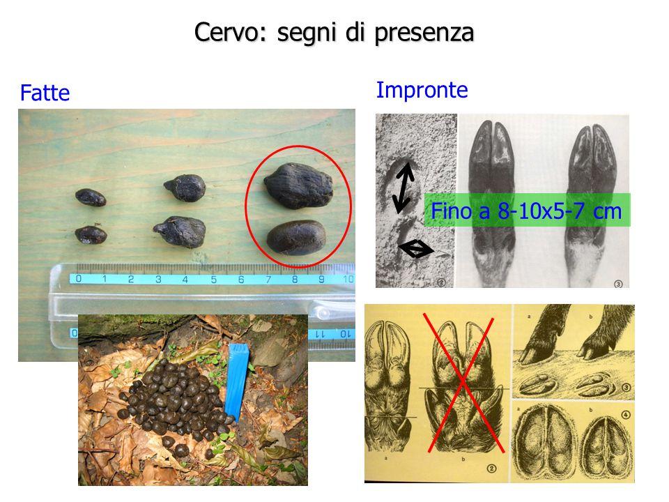 Cervo: segni di presenza Fatte Impronte Fino a 8-10x5-7 cm