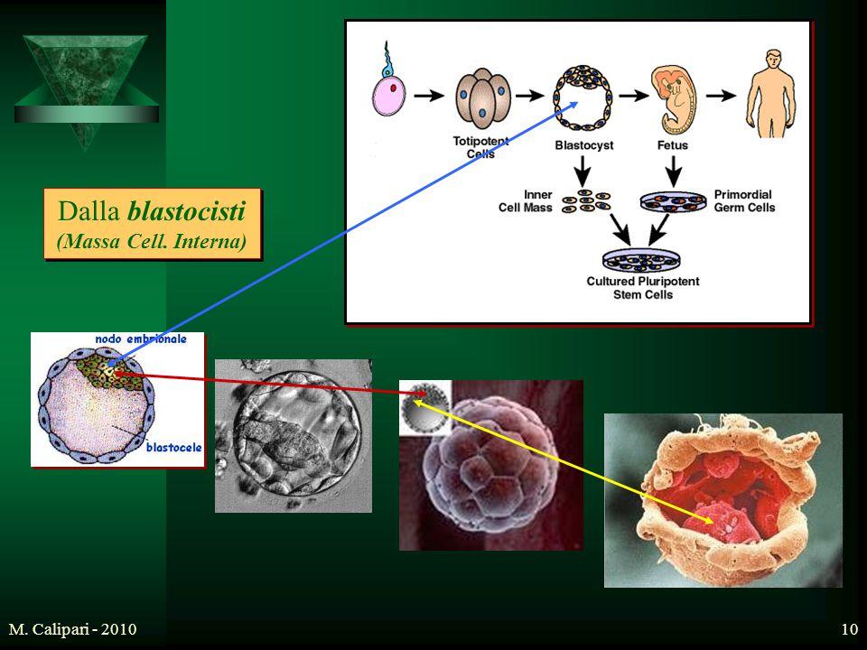 M. Calipari - 201010 Dalla blastocisti (Massa Cell. Interna)