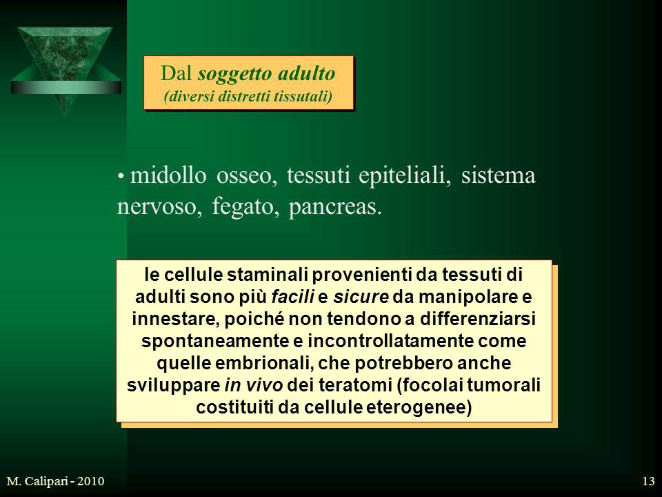 M. Calipari - 201013 Dal soggetto adulto (diversi distretti tissutali) midollo osseo, tessuti epiteliali, sistema nervoso, fegato, pancreas. le cellul