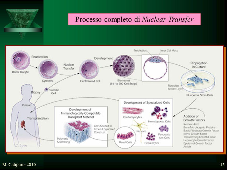M. Calipari - 201015 Processo completo di Nuclear Transfer