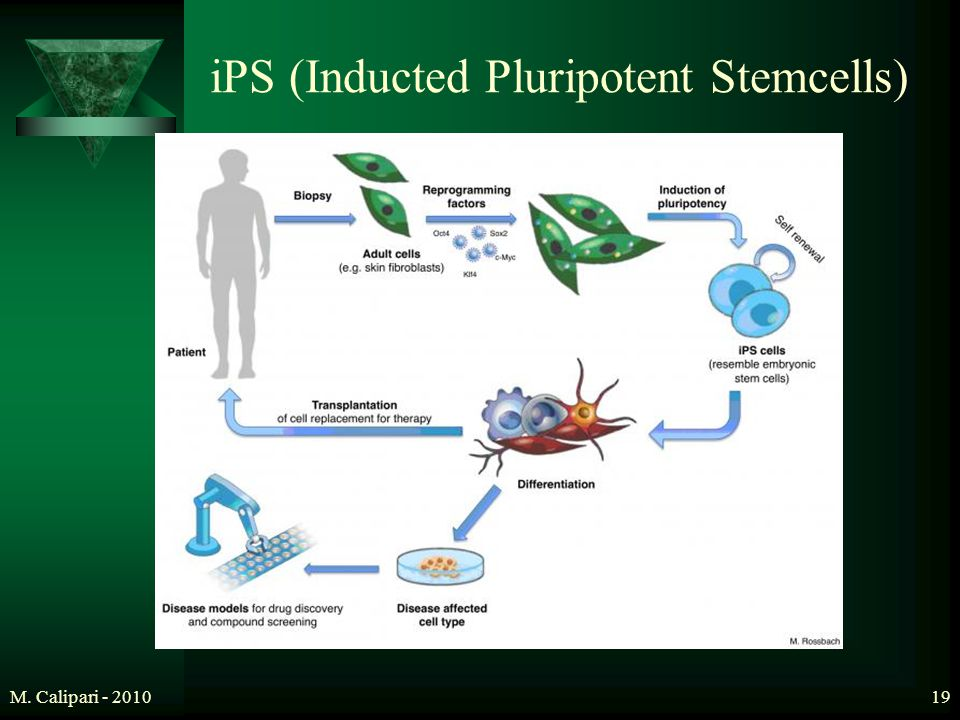 M. Calipari - 201019 iPS (Inducted Pluripotent Stemcells)