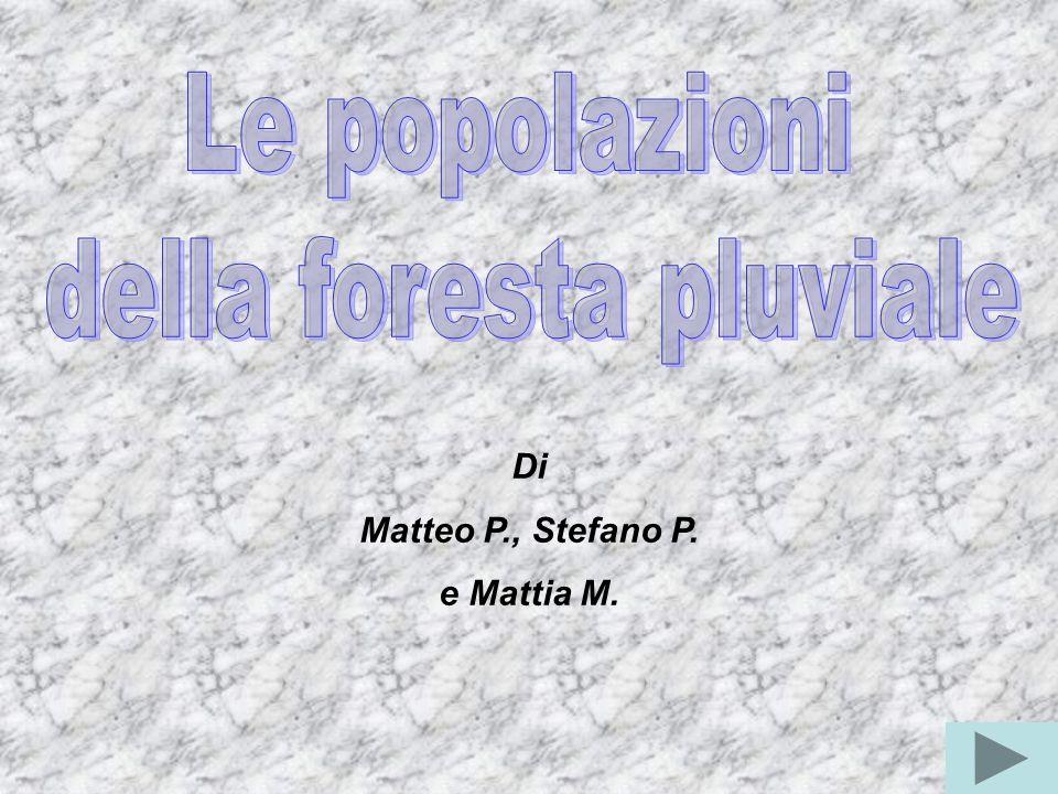 Di Matteo P., Stefano P. e Mattia M.