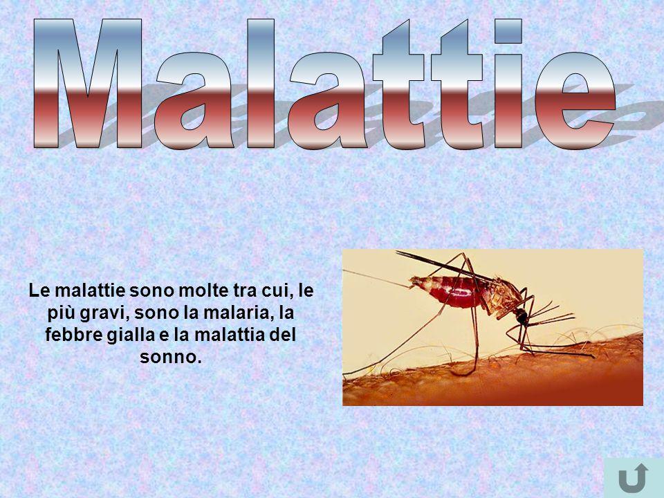 Le malattie sono molte tra cui, le più gravi, sono la malaria, la febbre gialla e la malattia del sonno.