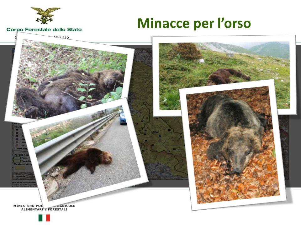 Comando Regionale Abruzzo Minacce per l'orso