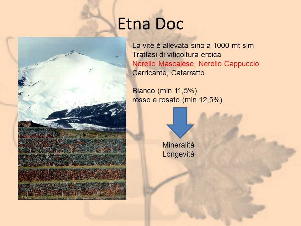 Etna Doc La vite è allevata sino a 1000 mt slm Trattasi di viticoltura eroica Nerello Mascalese, Nerello Cappuccio Carricante, Catarratto Bianco (min