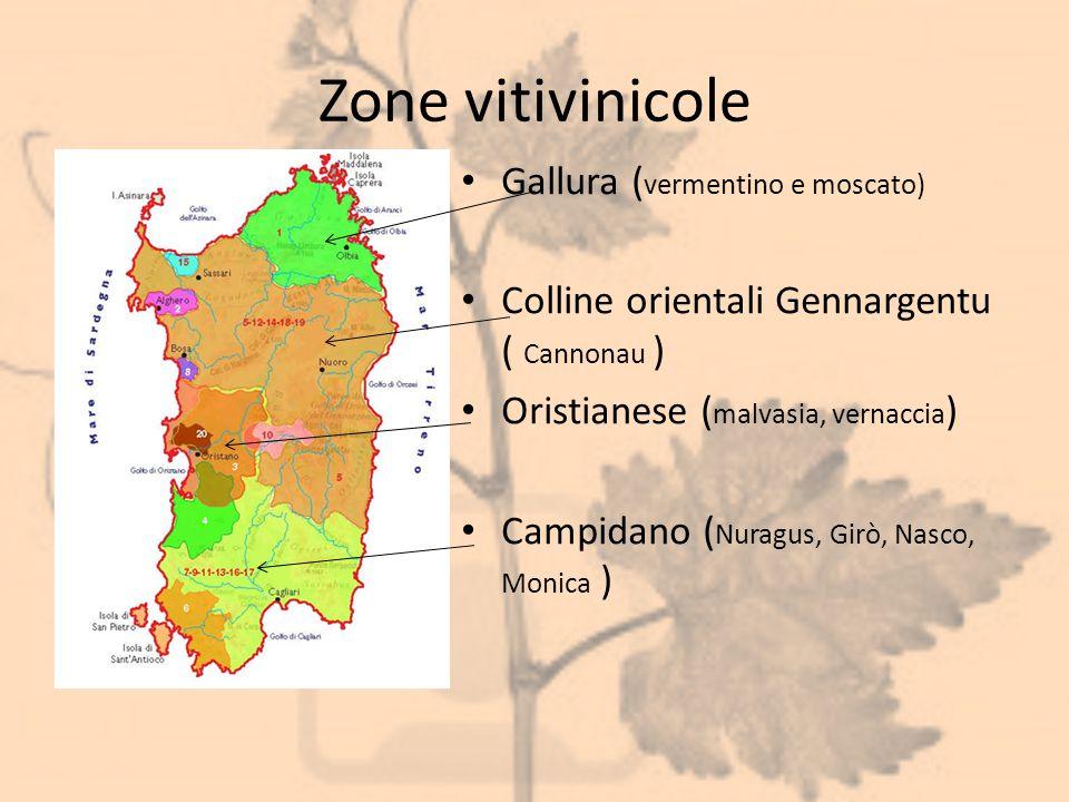 Zone vitivinicole Gallura ( vermentino e moscato) Colline orientali Gennargentu ( Cannonau ) Oristianese ( malvasia, vernaccia ) Campidano ( Nuragus,