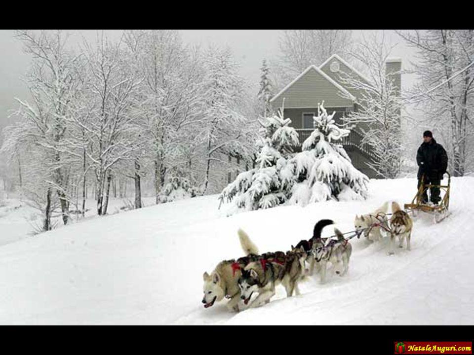 Il motore tradizionalmente usato il Lapponia è il cane da slitta…