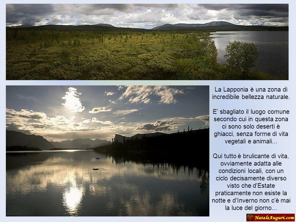 La Lapponia è una zona di incredibile bellezza naturale.