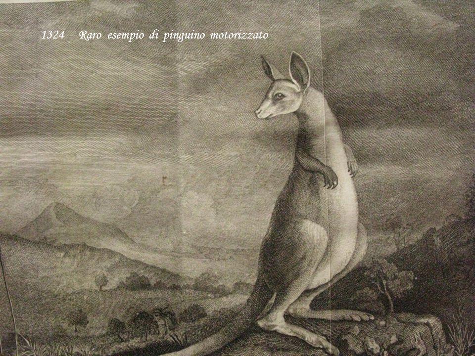 1324 - Raro esempio di pinguino motorizzato