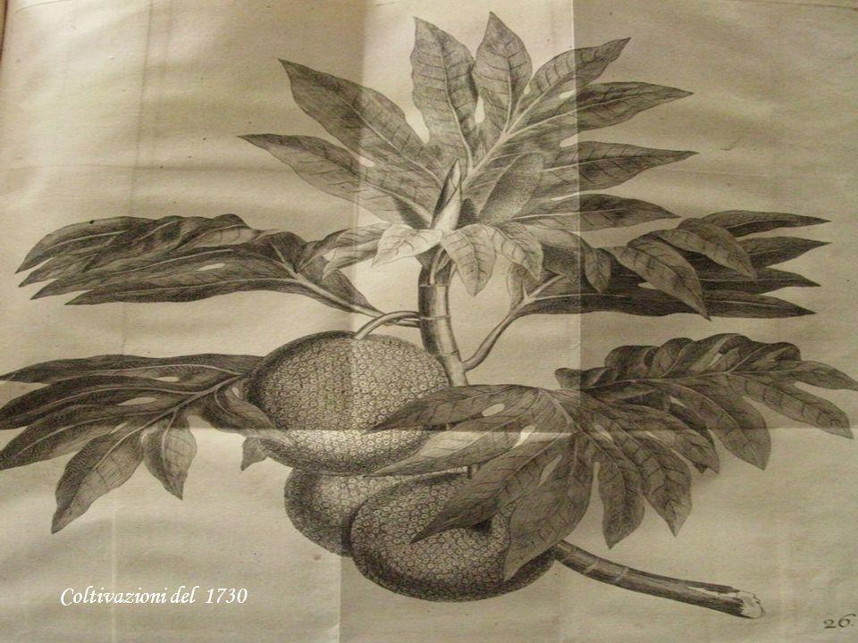 Coltivazioni del 1730