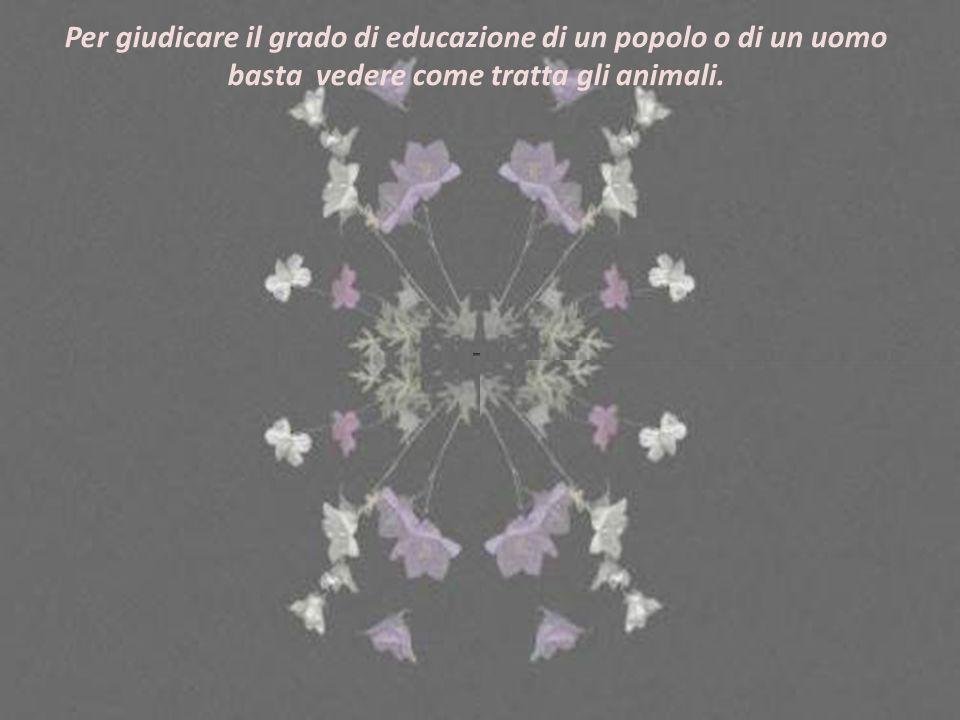 Oasi di NINFA Sermoneta (Latina) Composizione: Lulu Musica: A. Rieu, La vie continue Testo tradotto dallo spagnolo