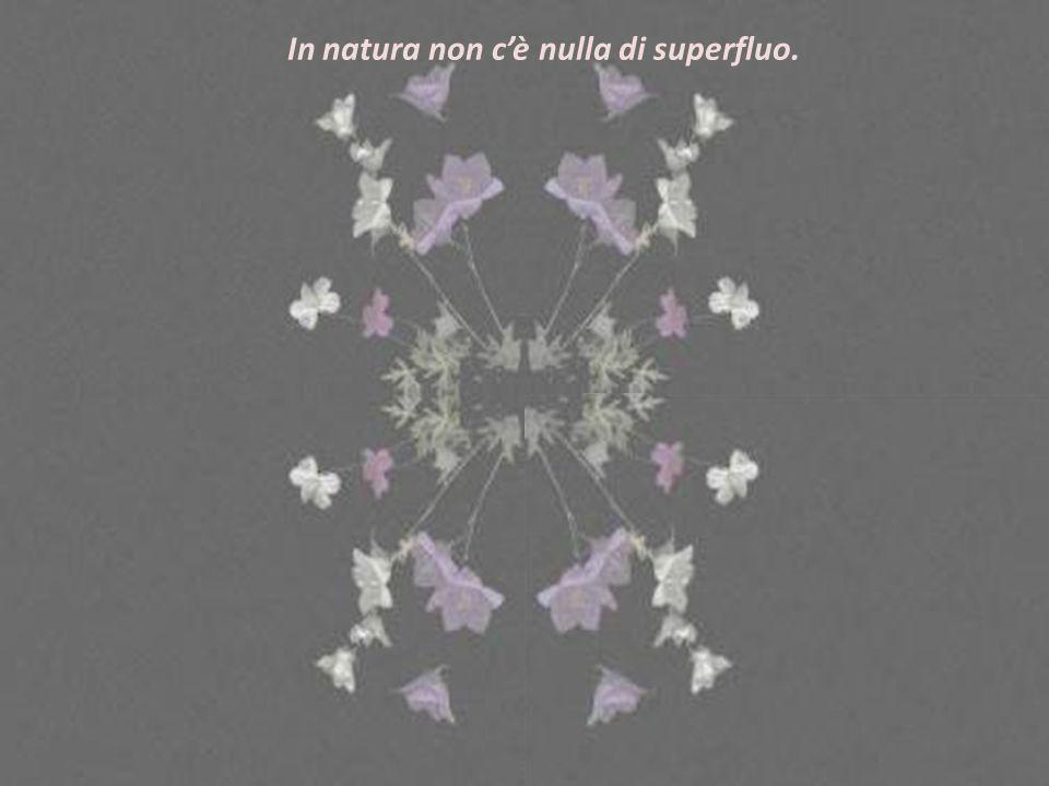 In natura non c'è nulla di superfluo.