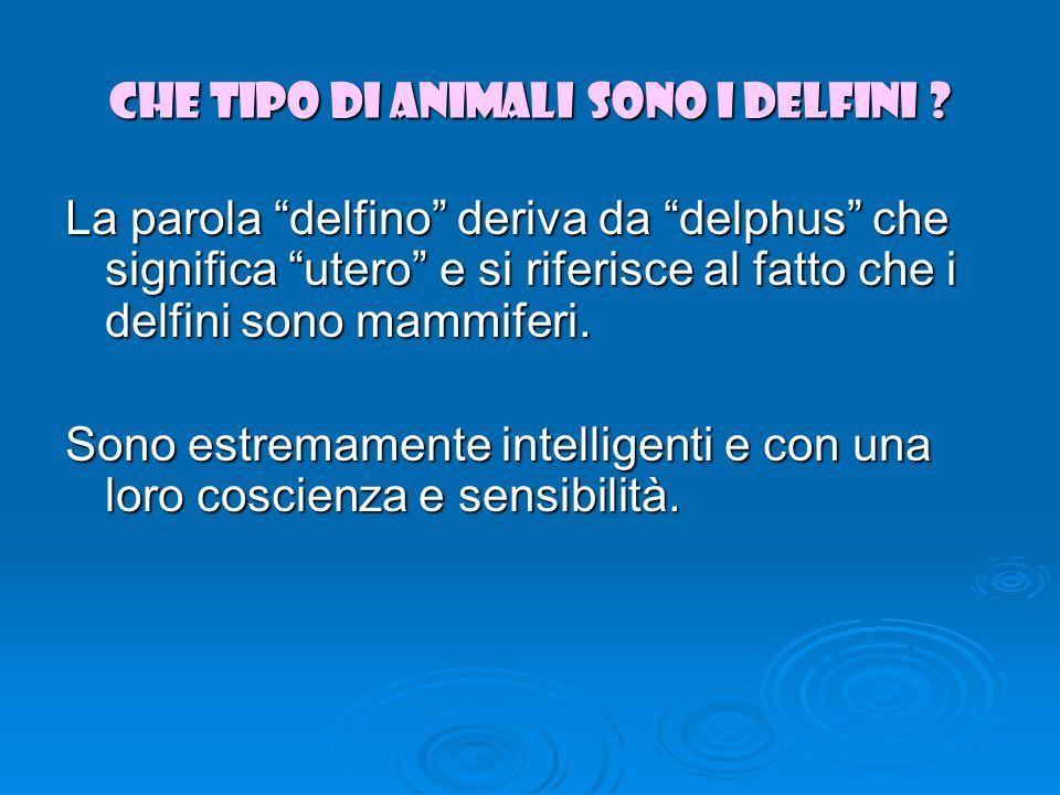 Che tipo di animali sono i delfini .