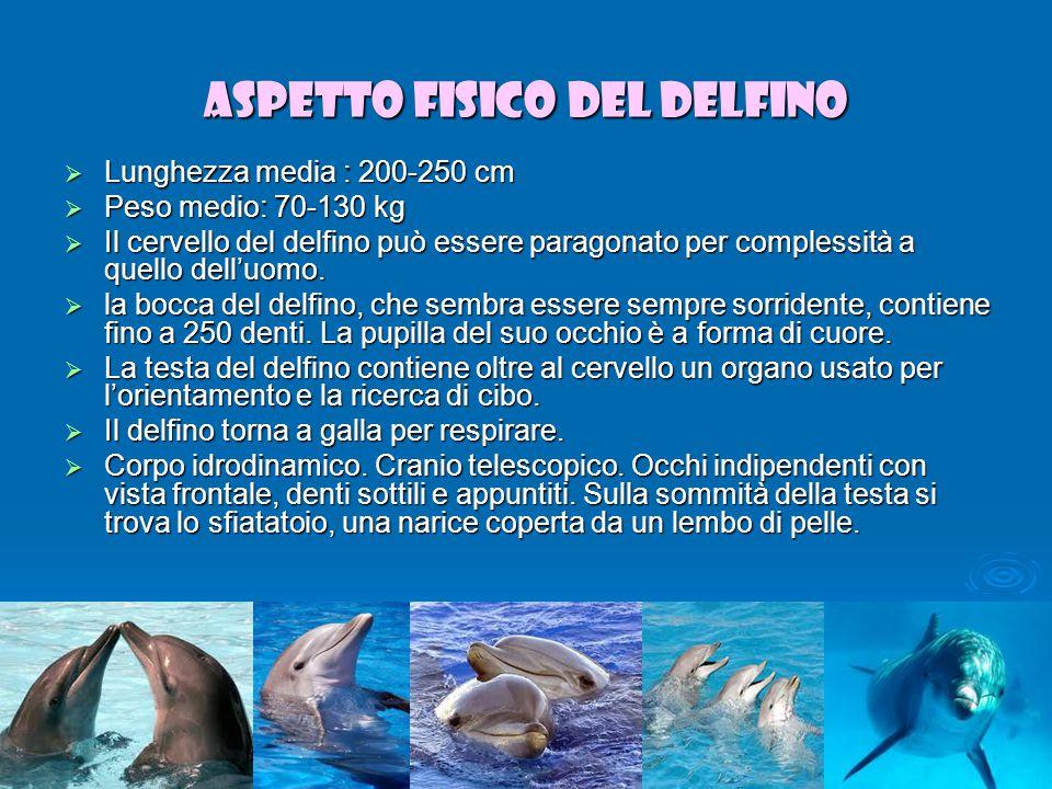 Aspetto fisico del delfino  Lunghezza media : 200-250 cm  Peso medio: 70-130 kg  Il cervello del delfino può essere paragonato per complessità a quello dell'uomo.
