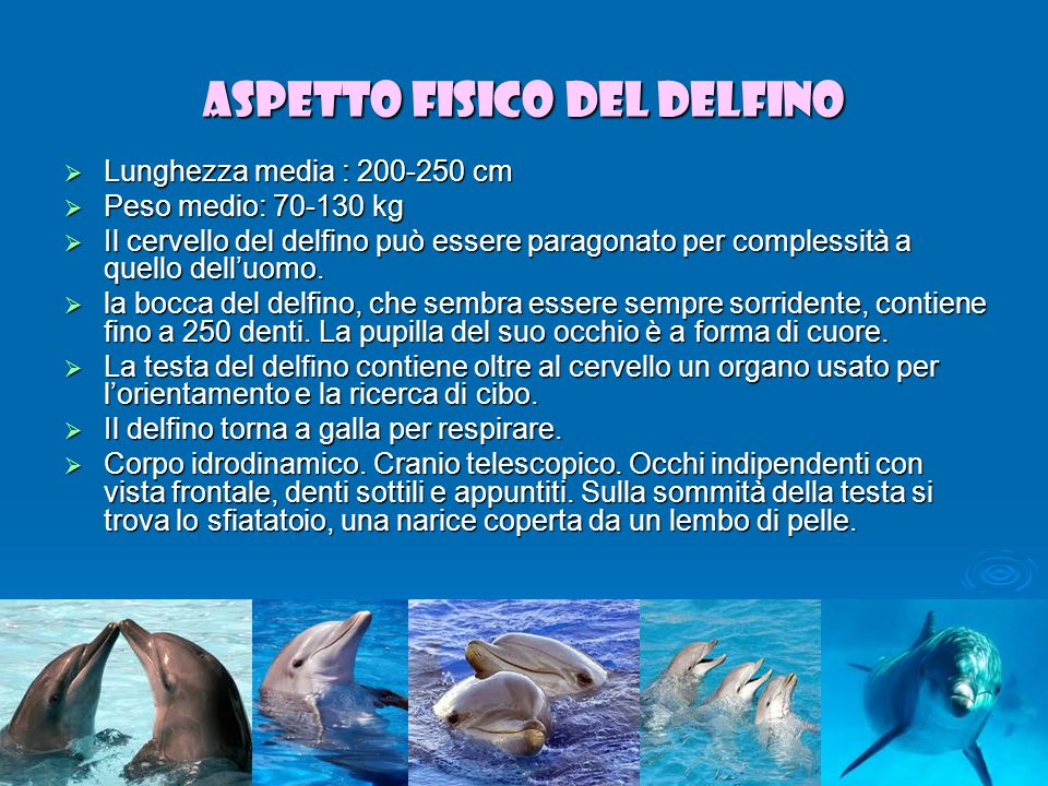 Alimentazione dei delfini Varia dal pesce ai calamari e ai crostacei.