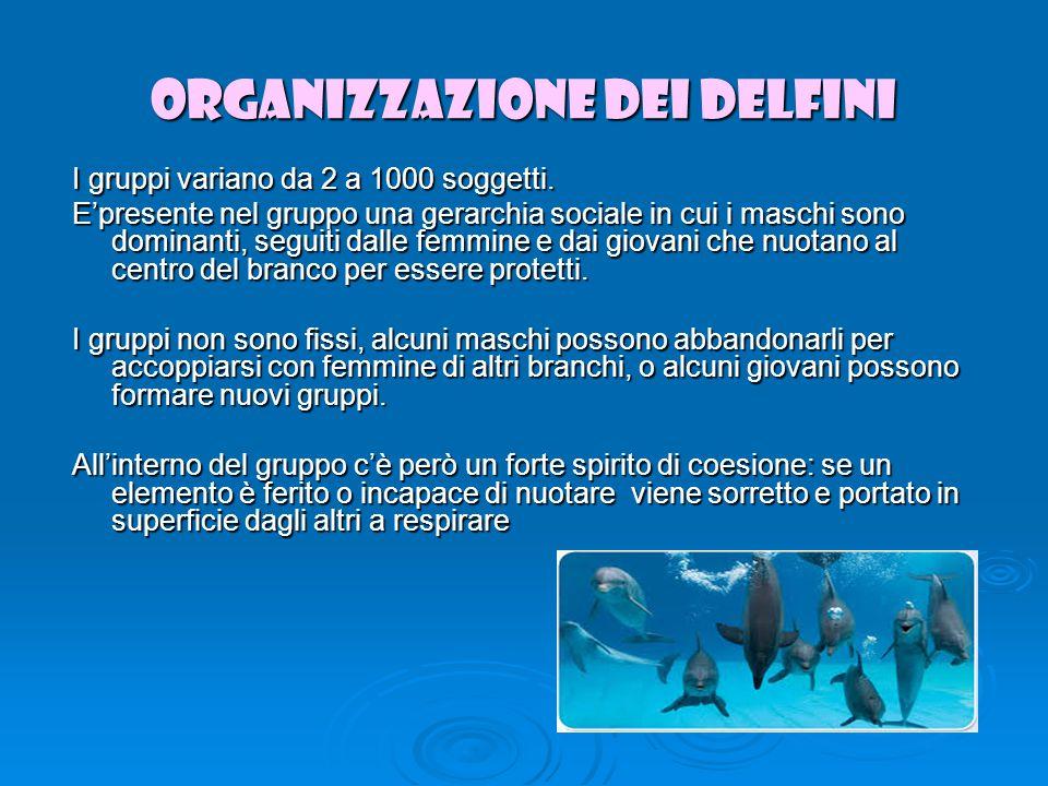 ORGANIZZAZIONE DEI DELFINI I gruppi variano da 2 a 1000 soggetti.