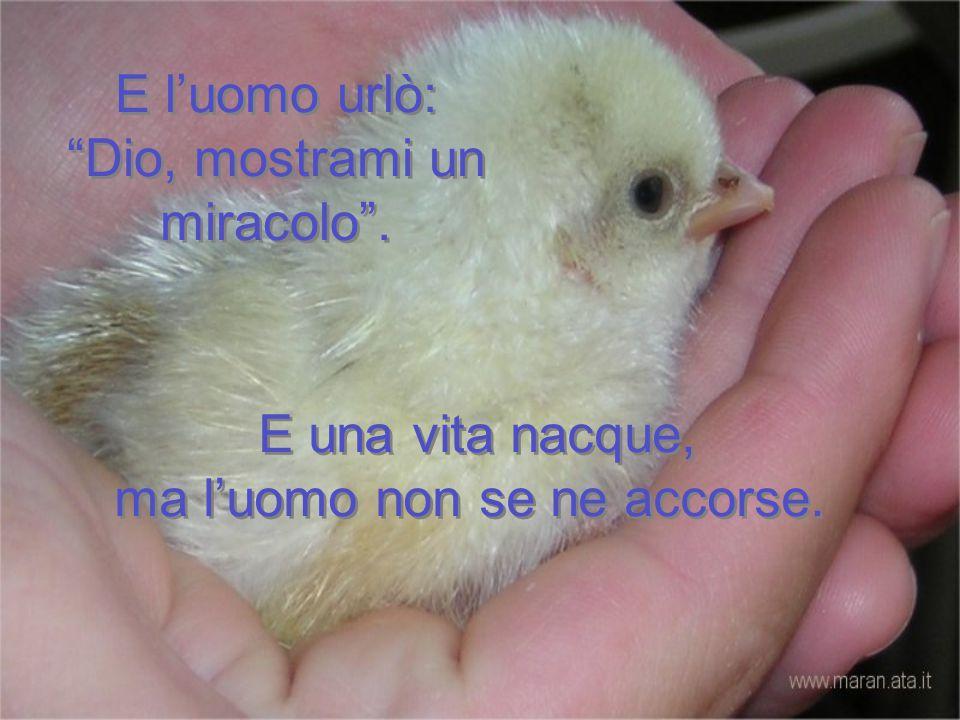 E l'uomo urlò: Dio, mostrami un miracolo .E una vita nacque, ma l'uomo non se ne accorse.