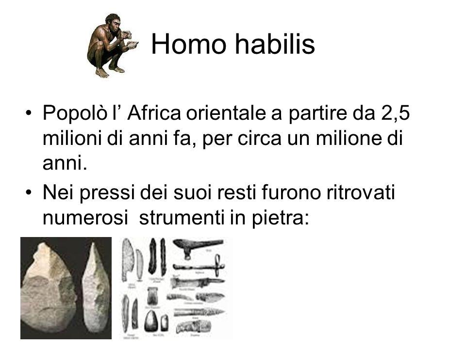 Homo habilis Popolò l' Africa orientale a partire da 2,5 milioni di anni fa, per circa un milione di anni. Nei pressi dei suoi resti furono ritrovati