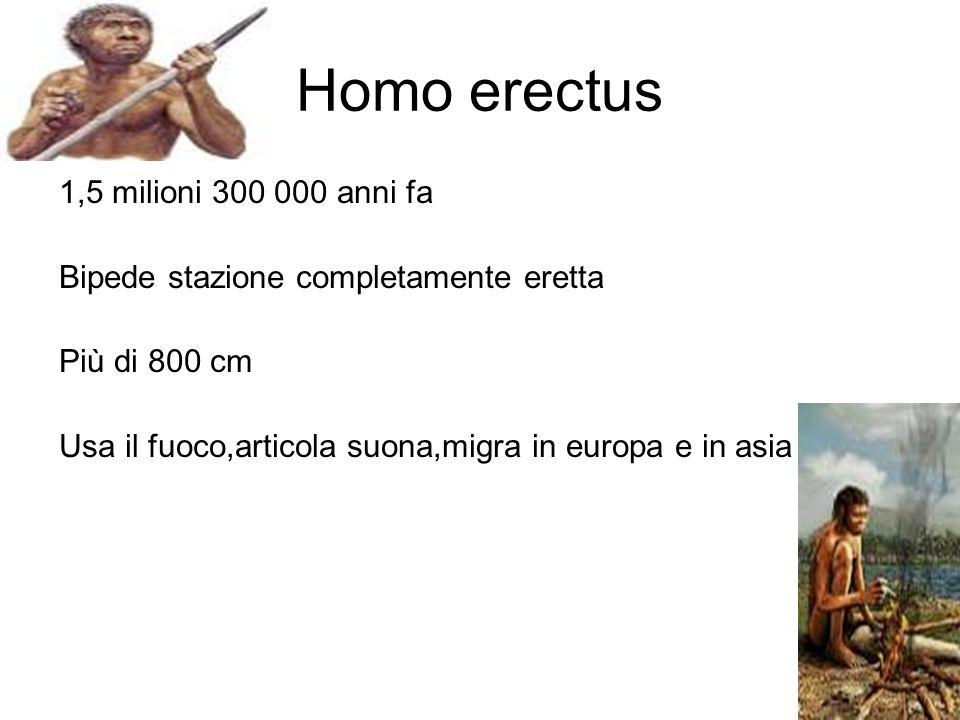 Homo erectus 1,5 milioni 300 000 anni fa Bipede stazione completamente eretta Più di 800 cm Usa il fuoco,articola suona,migra in europa e in asia
