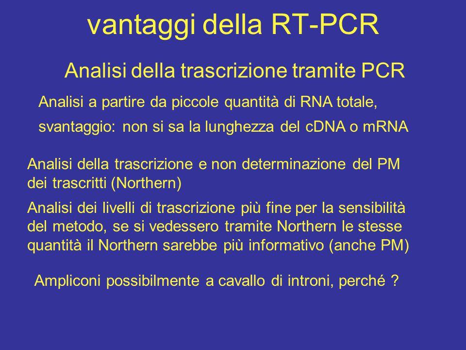 vantaggi della RT-PCR Analisi della trascrizione tramite PCR Analisi della trascrizione e non determinazione del PM dei trascritti (Northern) Analisi