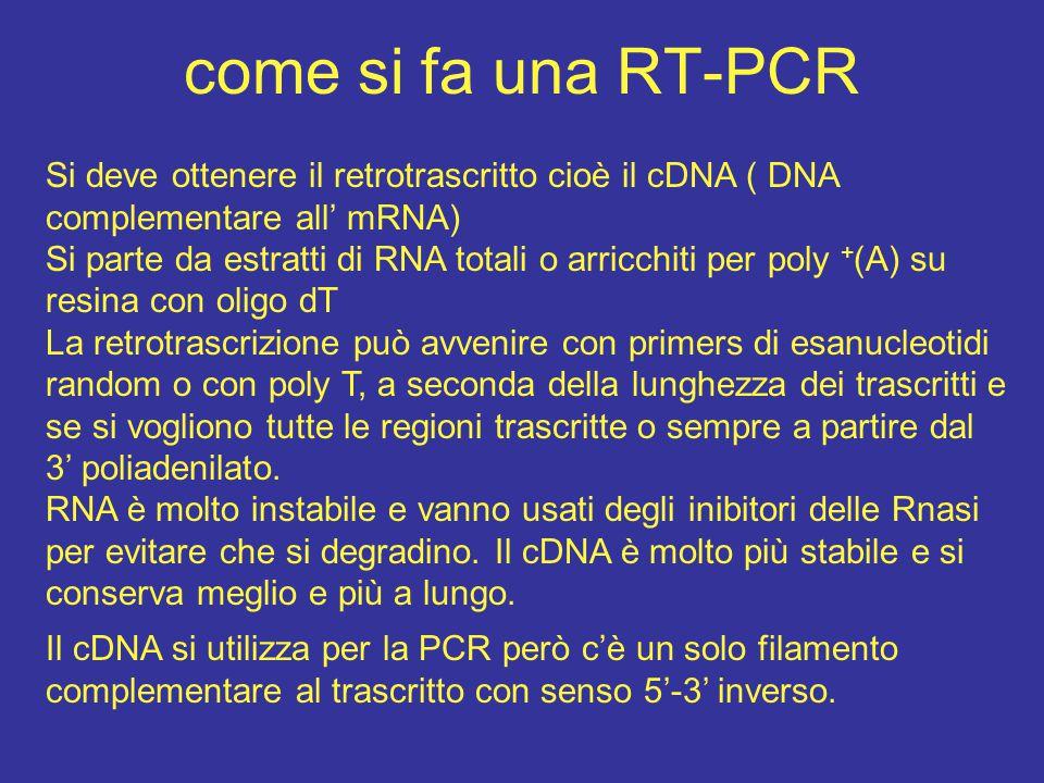 come si fa una RT-PCR Si deve ottenere il retrotrascritto cioè il cDNA ( DNA complementare all' mRNA) Si parte da estratti di RNA totali o arricchiti
