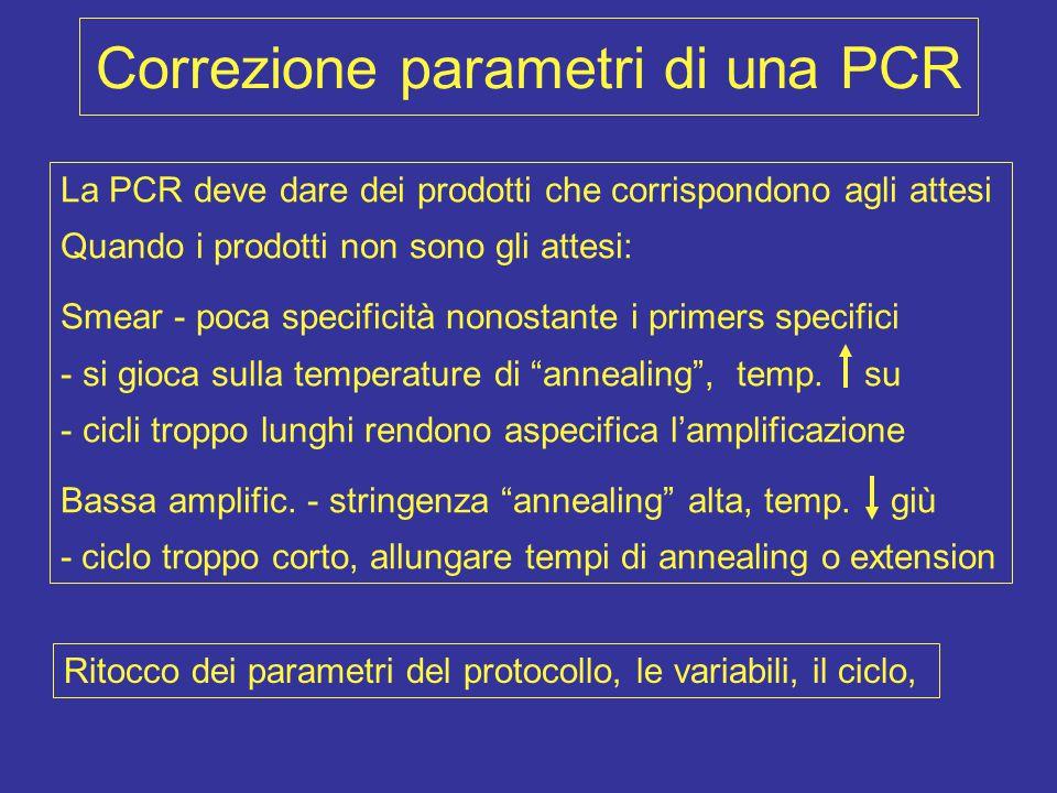 Correzione parametri di una PCR La PCR deve dare dei prodotti che corrispondono agli attesi Quando i prodotti non sono gli attesi: Smear - poca specif