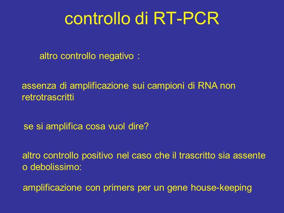 controllo di RT-PCR altro controllo negativo : assenza di amplificazione sui campioni di RNA non retrotrascritti se si amplifica cosa vuol dire? altro