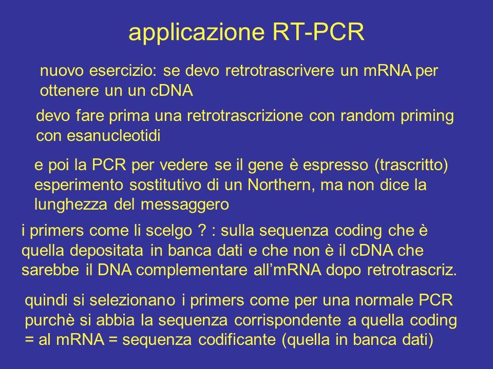 applicazione RT-PCR nuovo esercizio: se devo retrotrascrivere un mRNA per ottenere un un cDNA devo fare prima una retrotrascrizione con random priming