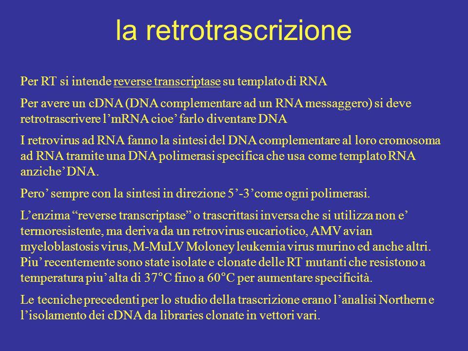 la retrotrascrizione Per RT si intende reverse transcriptase su templato di RNA Per avere un cDNA (DNA complementare ad un RNA messaggero) si deve ret