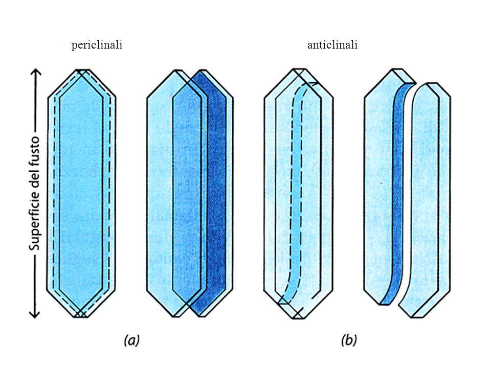 periclinalianticlinali
