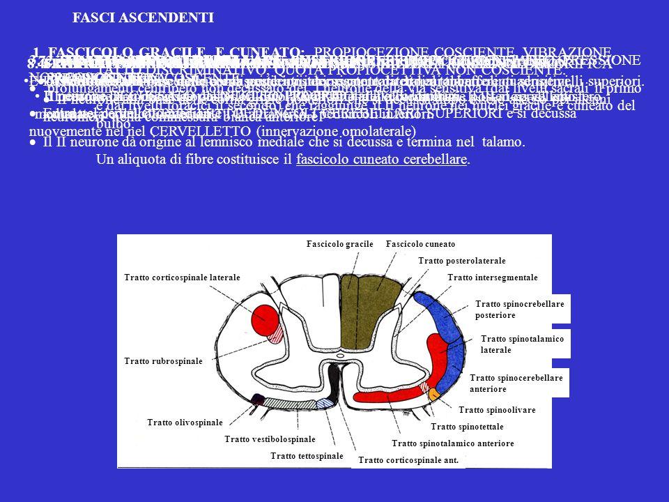 1. FASCICOLO GRACILE E CUNEATO: PROPIOCEZIONE COSCIENTE, VIBRAZIONE, TATTO DISCRIMINATIVO, QUOTA PROPIOCETTIVA NON COSCIENTE.  prolungamenti centripe