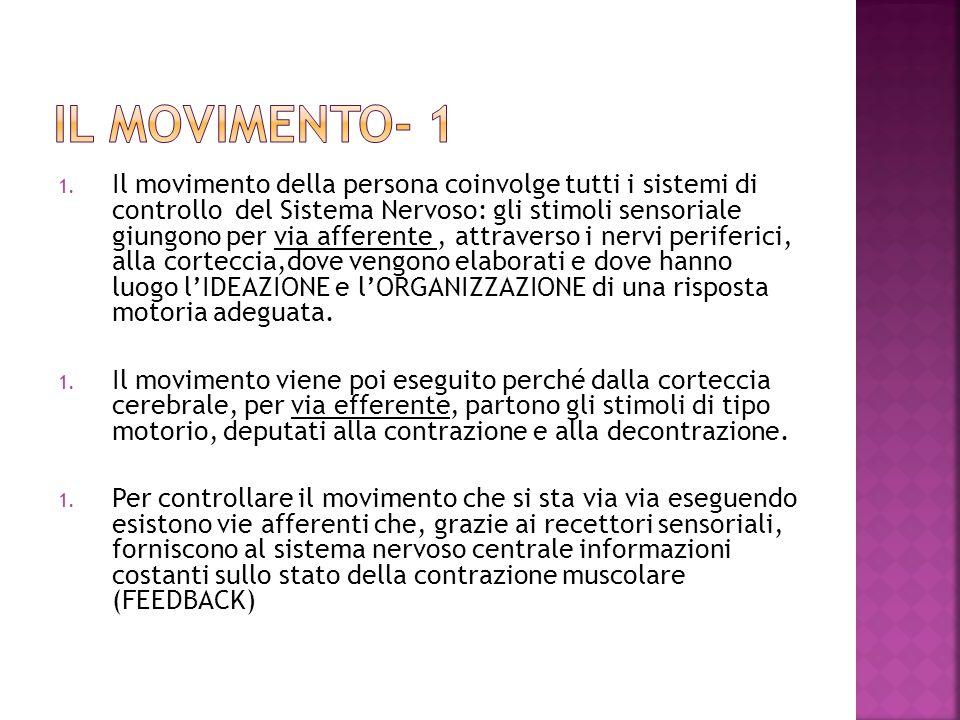 1. Il movimento della persona coinvolge tutti i sistemi di controllo del Sistema Nervoso: gli stimoli sensoriale giungono per via afferente, attravers