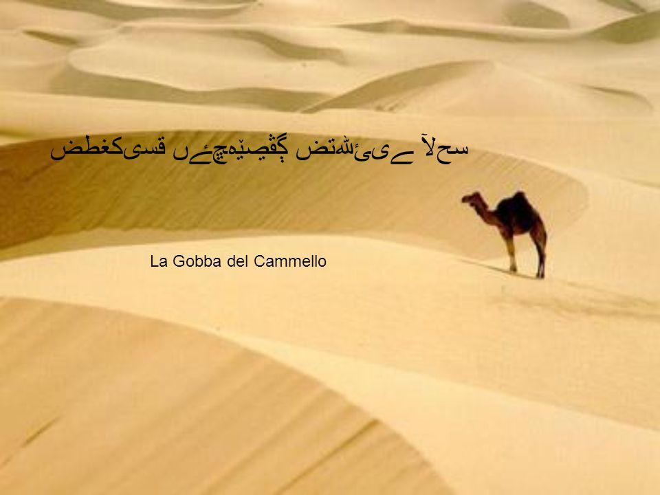 قسىكغطض ڳڤڝێەﭿﮱﮟ ﮯﯼﺊﷲﺗﺽ ﺴﺢﻵ La Gobba del Cammello
