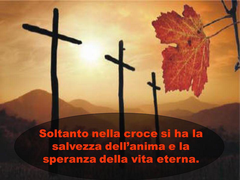 Soltanto nella croce si ha la salvezza dell'anima e la speranza della vita eterna.